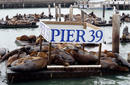 Seals Relax At Pier 39 | by Flight Centre's Kylie Schreiber