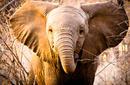 Elephant, Kruger National Park   by Flight Centre's Stephen Bullock