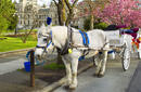 Take a horse and carriage
