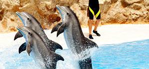 Sea World: Dolphin Show