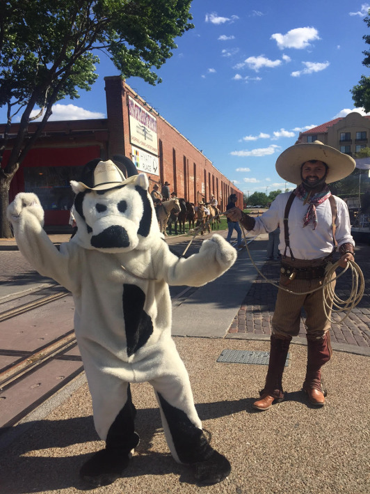 Sunrise's Cash Cow is lassoed by a cowboy in Fort Worth, Texas.