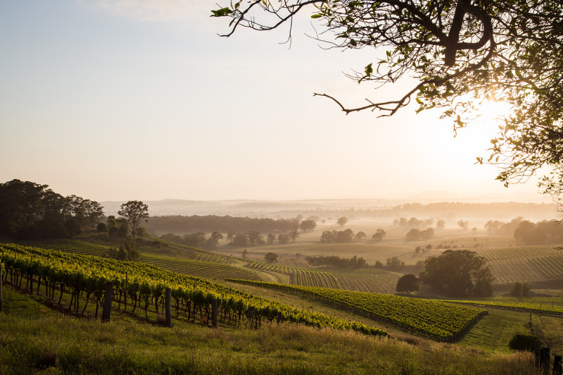 Rolling hills covered in vineyards and morning mist in the Hunter Valley, New South Wales.