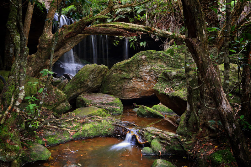 Fitzroy Falls tumble and trickle through forest in the New South Wales Southern Highlands. Image: Getty