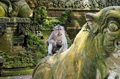 Monkey Padangtegal Bali Indonesia