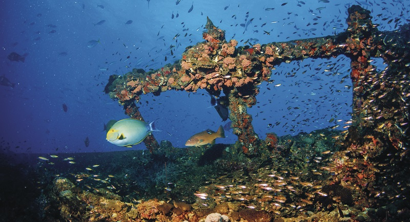 SS Yongala dive site in Townsville. Image: Tourism and Events Queensland.
