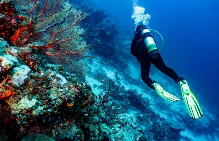 person in wet suit with oxygen tank and flippers scuba diving next to coral