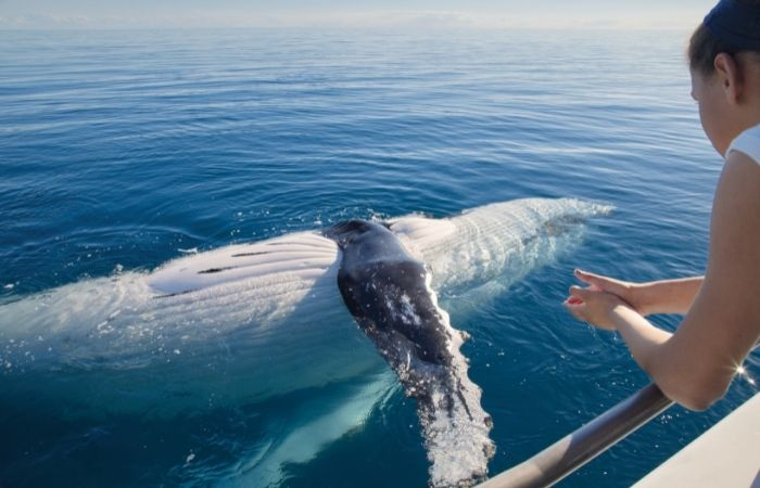 person looking at a whale in ocean from side of boat