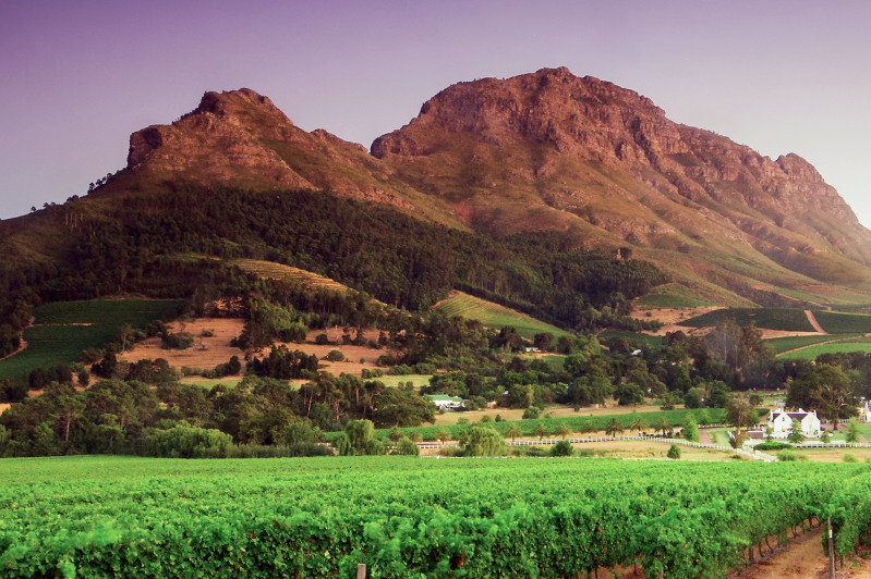 Vineyards with a mountain backdrop in South Africa.