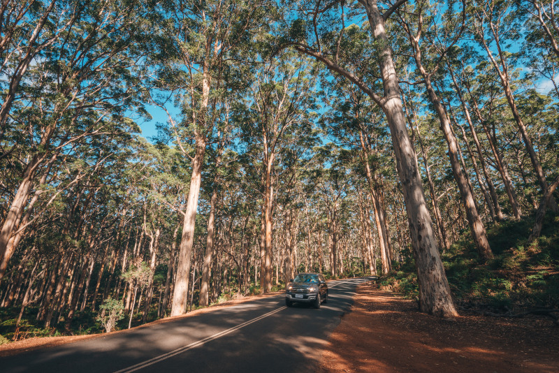 car driving through large trees in WA