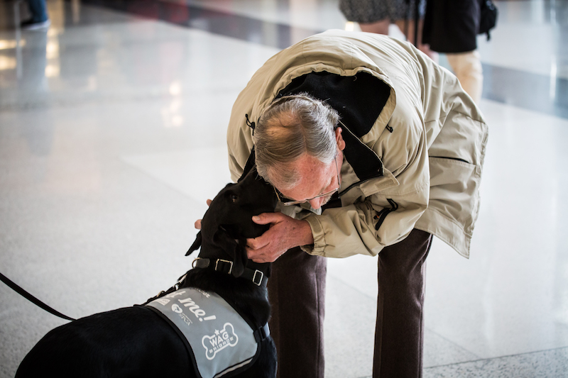 Wag Brigade greeting a passenger. Image: Courtesy San Francisco International Airport.