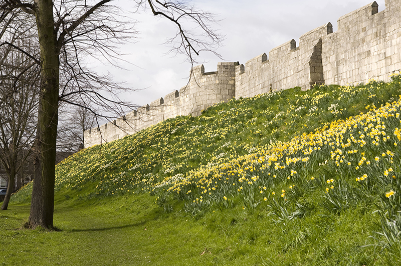 The medieval city walls of York in spring.