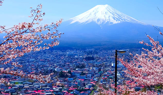 Cherry Blossom and Mount Fuji